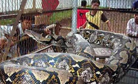辽宁 修路 挖出 巨兽 图片 千年 真龙 云南 8米 大蛇