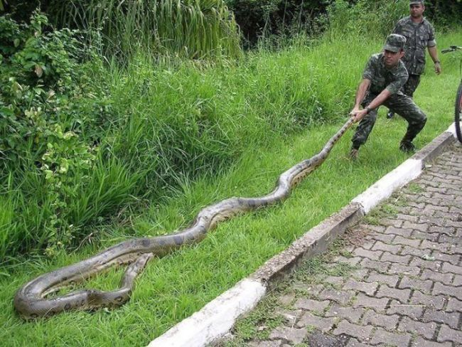巨蛇灵异事件_