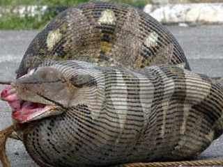 挖出大蛇事件_