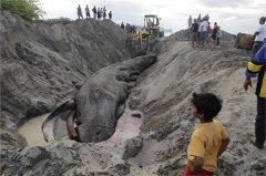 工地古墓挖出巨蛇视频,工地挖出十六米巨蛇,古墓挖出千年大蛇视频