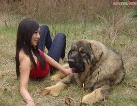 女人与黑公犬图片