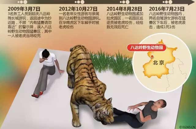 动物园施救过程竟是这样!老虎伤人监控完整视频首次对外公布真相