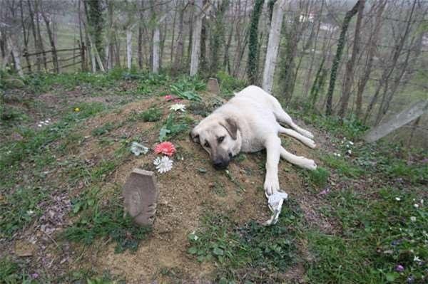 宠物离世可休丧假什么时候在中国实行?宠物离世休丧假限哪些宠物