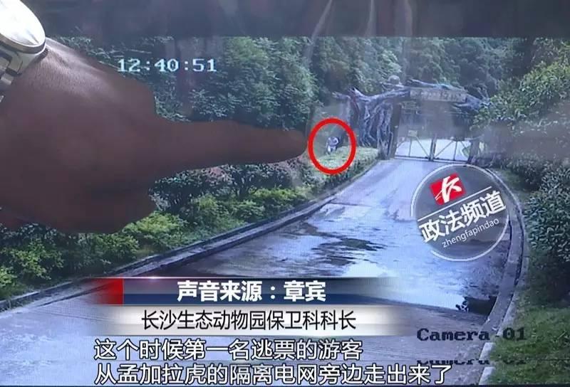 长沙动物园2女1男逃票入园被老虎包围全过程视频,涉事3人咋处置?